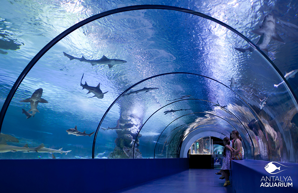 ANTALYA CONVENTION - Beautiful photography reveals underwater complexity aquariums